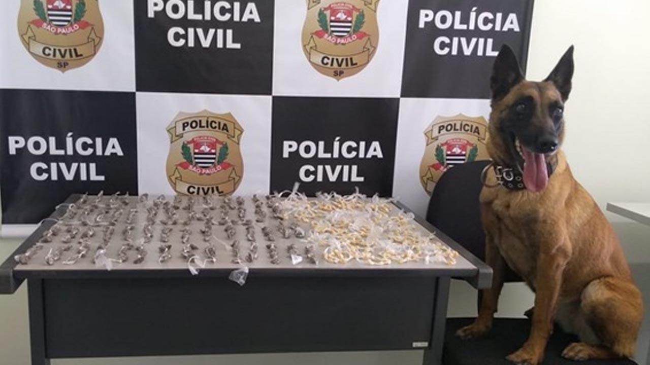 Dois traficantes são detidos com ajuda de cão farejador em Bauru