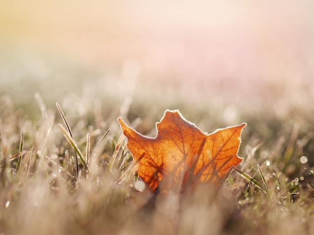 Fallengelassen, vergessen, blatt, herbst, natur, wiese, wind, herbstblatt, ewigkeit, grashalme, schweigen, alleinsein, einsamkeit, sandkorn, meer, texte, blog, jahreszeiten poesie, lyrik, bild, photo