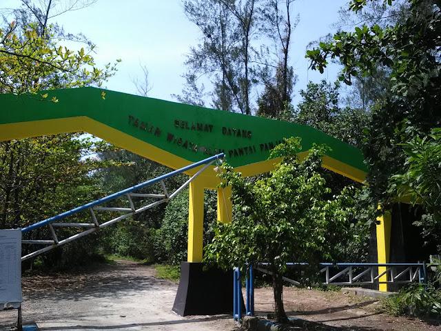hutan mangrove bengkulu