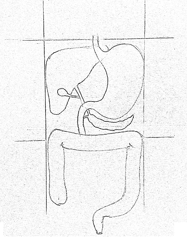 It is a picture of Luscious Drawing Of The Digestive System