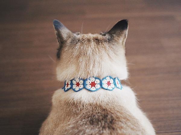 アフリカンフラワーモチーフで作った首輪をつけたシャムトラ猫の後頭部