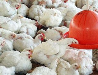 Mais de 1 bilhão de animais podem morrer, alerta entidade