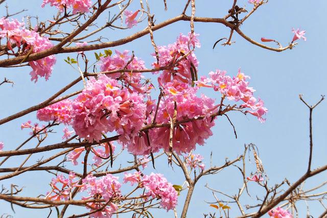 Taichung-flower