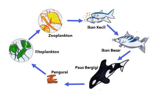 Rantai Makanan Di Ekosistem Laut