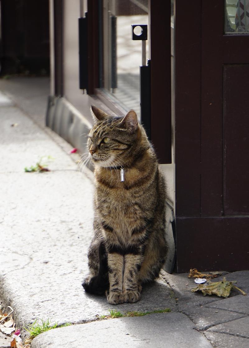 pariisi, kissa, matkailu, matkablogi