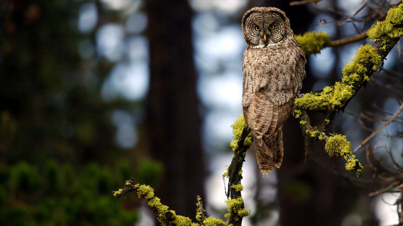 You probably already know that owls are usually active at night, and can turn their heads almost completely around; but here are some owl facts that'll likely surprise you.