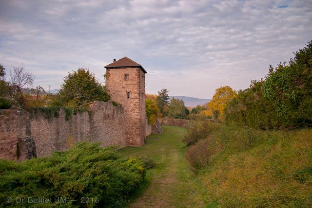 Fortifications de Bergheim (Alsace). Front est - tour carrée.