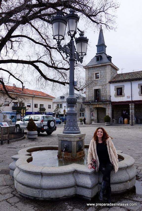 Olmo plaza Guadarrama