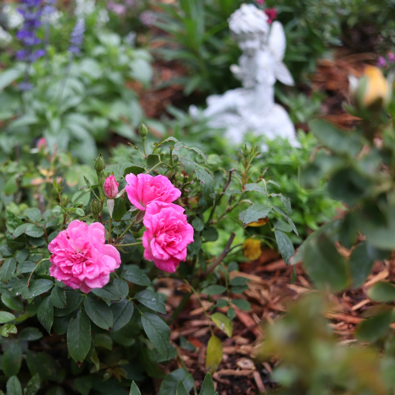Potager Garden Blogs: PROGRESS ON THE POTAGER GARDEN - Cottage Garden
