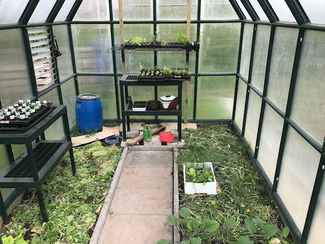Das Gewächshaus ist für die Tomaten vorbereitet (c) by Joachim Wenk