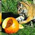 Λιχουδιές στα άγρια ζώα για το Halloween...