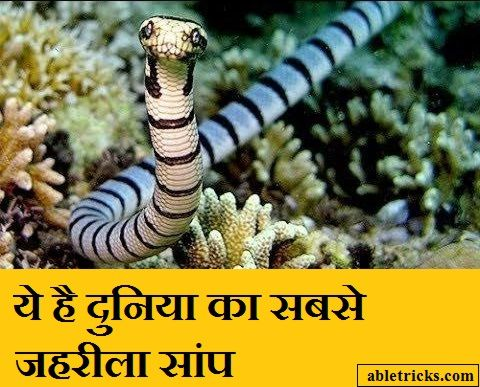 Know which is the most poisonous snake in the worl...