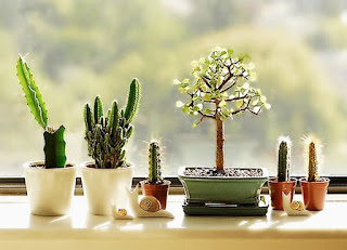 Home Decor Tips With Ornamental Plants