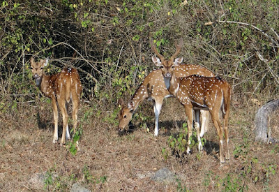 Best National Park in India, Ranthambore National Park, Rajasthan