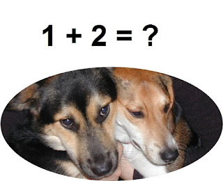 Dogs Understand Math