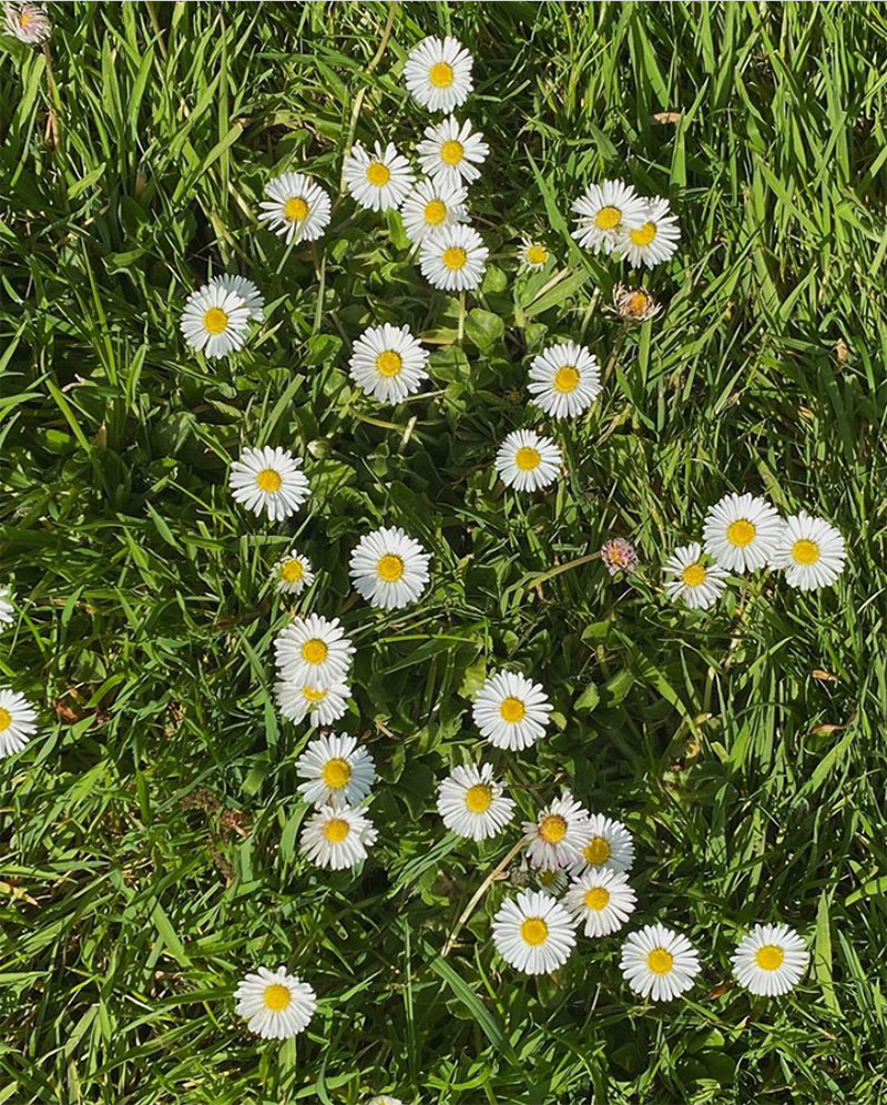 Late-Spring Inspiration | Coming Up Daisies