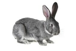 Rabbit Farming In Kenya: Step By Step Guide