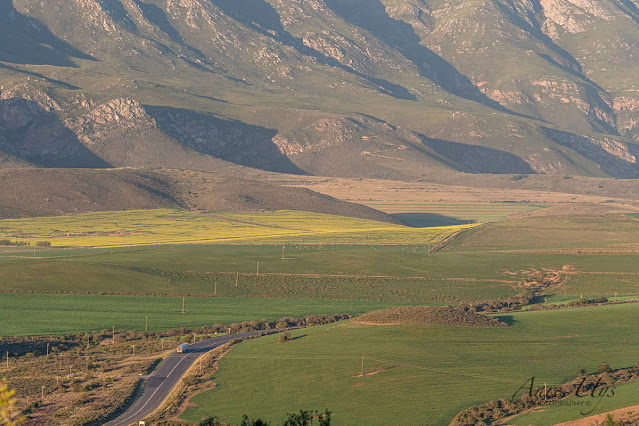 Landscape at the foot of the Langeberg mountains