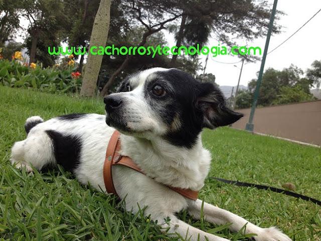 Esquizofrenia en perros dog mente perro puppy cachorros y tecnologia shurkonrad