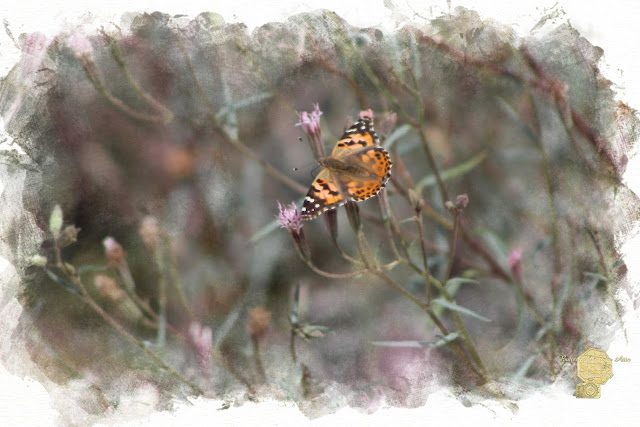 Painted Lady Butterflies In Digital Watercolor