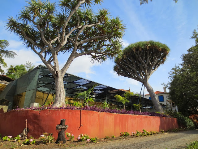 plants and trees in Quinta das Cruzes Museum