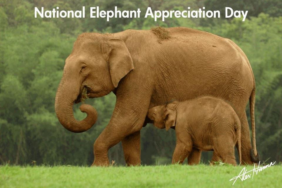 National Elephant Appreciation Day Wishes Pics