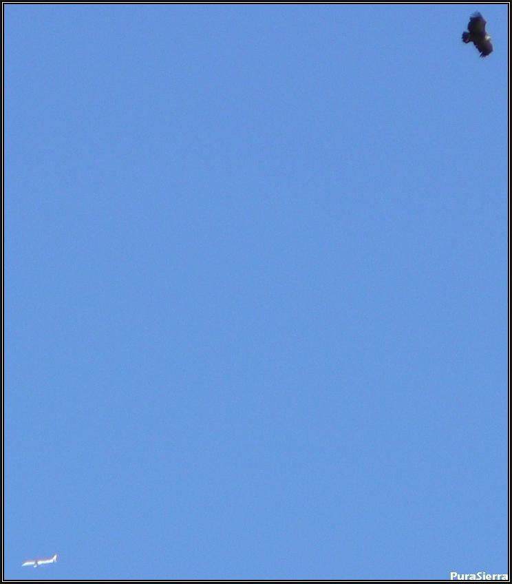Buitre y avión sobre el Cañón De Los Arcos
