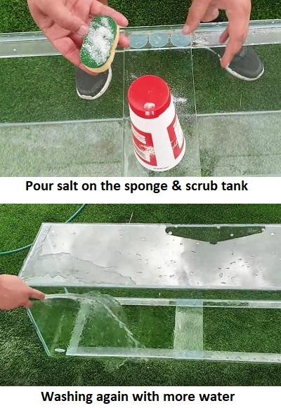 Scrub aquarium and wash it