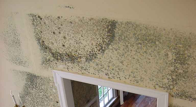 Mold Removal Water Damage Restoration