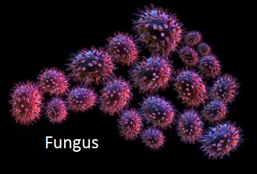 Diseases Caused By Fungi In