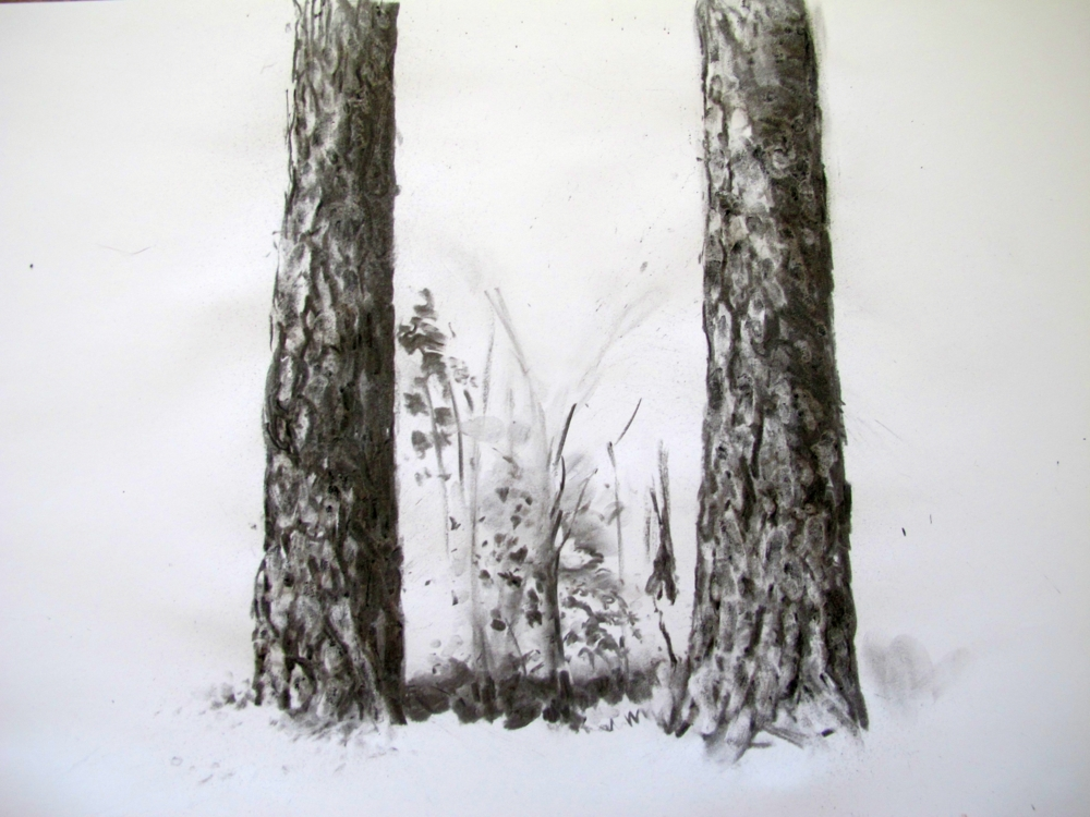 pine tree bark in charcoal by susan wellington