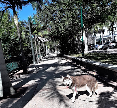 dog friendly in Jupiter, Fl, dogs, dog walking trail, dog friendly places in South Florida