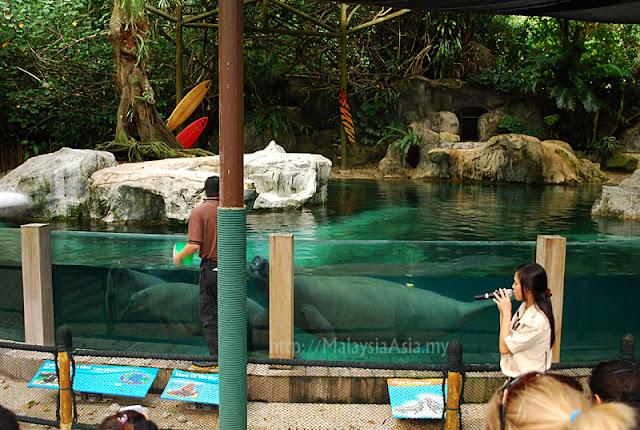 Singapore Zoo Dugong