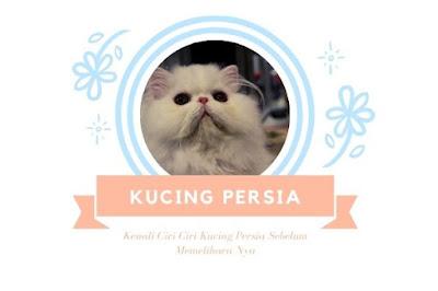 Ciri Ciri Kucing Persia