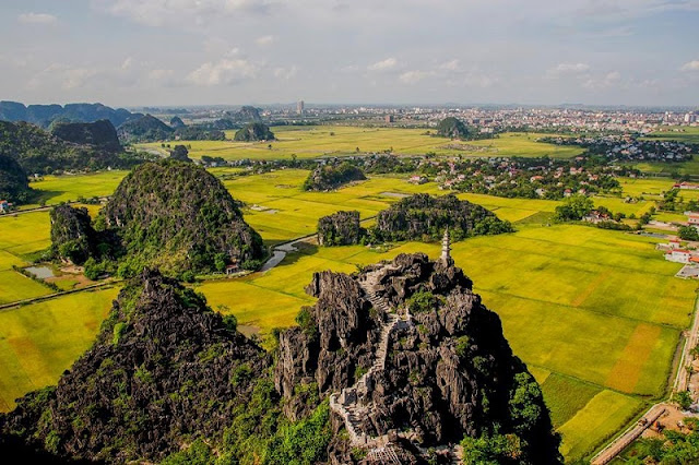 A panoramic view of the ripe rice season in Tam Coc