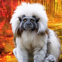 G2R Rescue The Tamarin