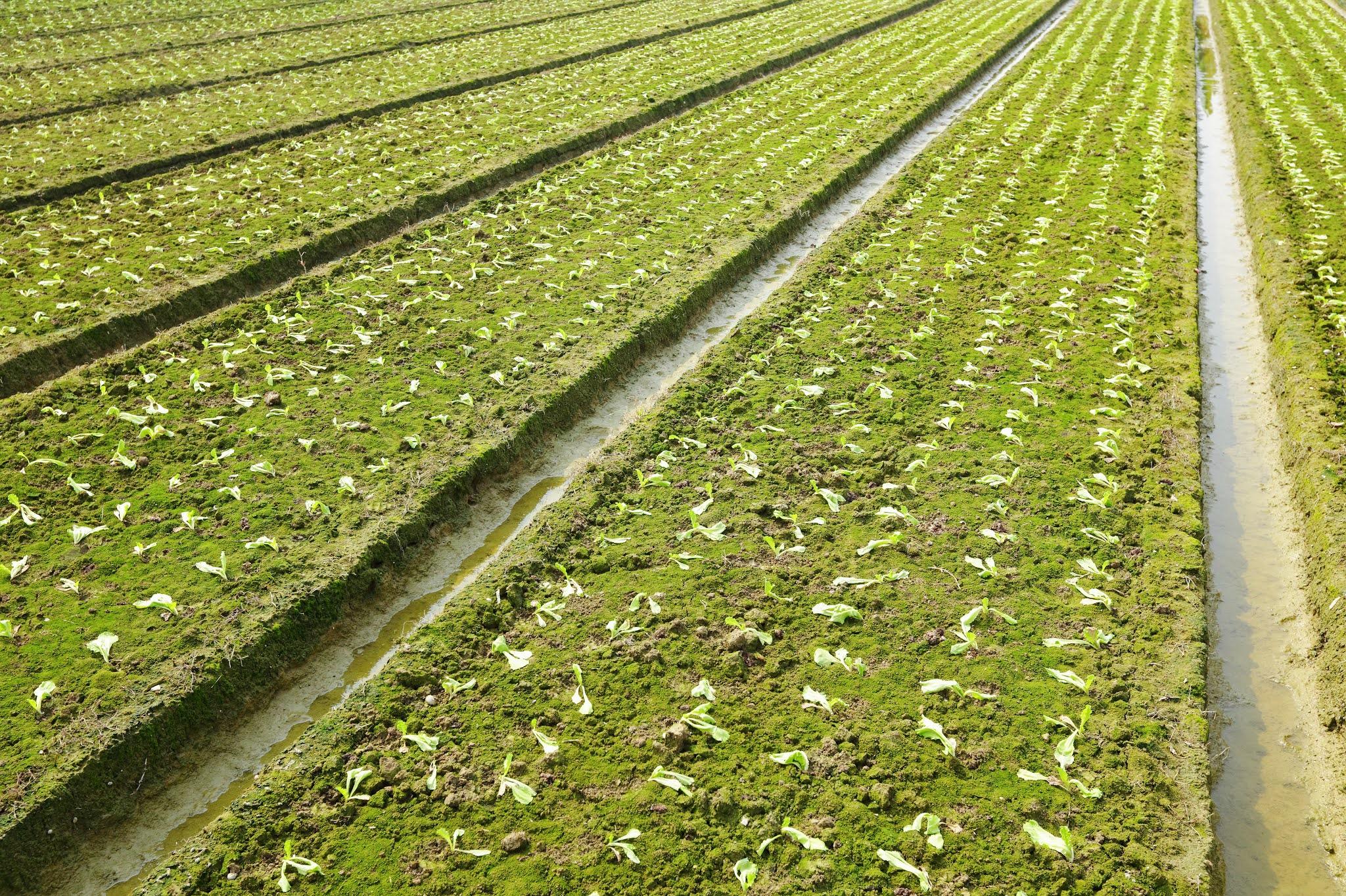 """السيسي يتفقد مشروع """"مستقبل مصر"""" للإنتاج الزراعي"""
