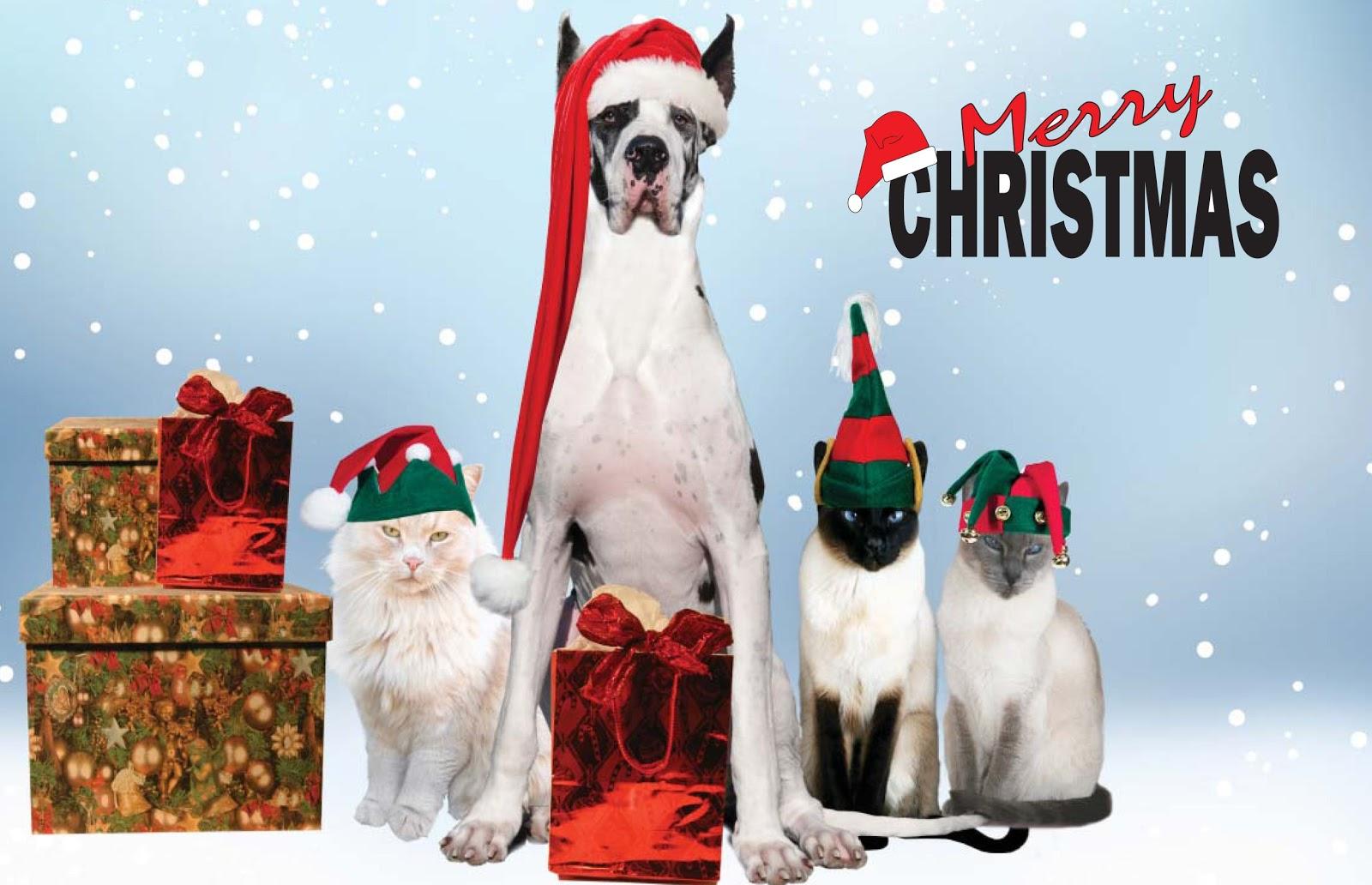 cane, gatti, cappelli di babbo natale, scritta buon natale