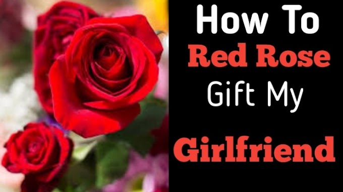 How To Red Rose Gift My Girlfriend
