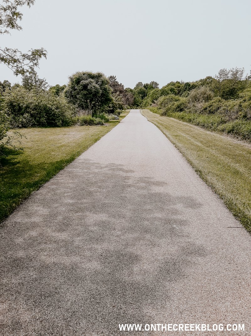 I love taking nature walks!  Here are pictures from my first nature walk of summer 2019!