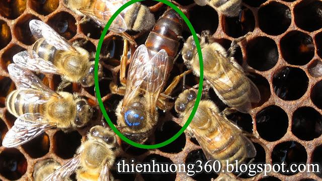 Mật ong và đặc điểm loài ong