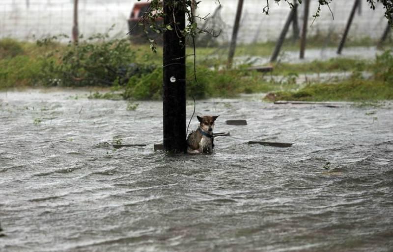 Σκύλοι που εγκαταλείφθηκαν, και απελπισμένοι ιδιοκτήτες που παλεύουν να σώσουν τα ζώα τους στο Τέξας