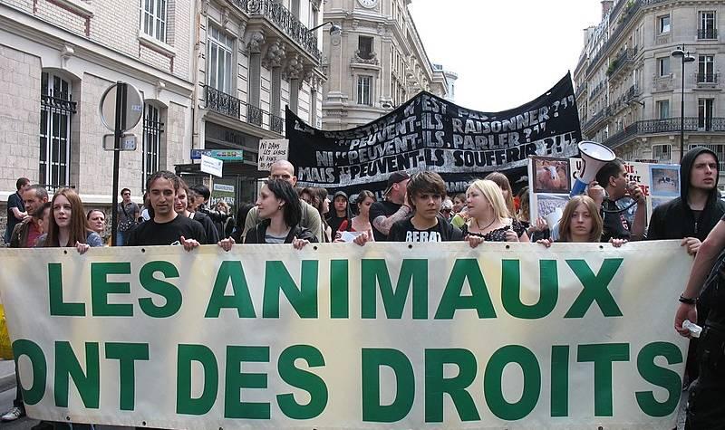 Chevaux mutilés : le silence assourdissant des animalistes et des antispécistes