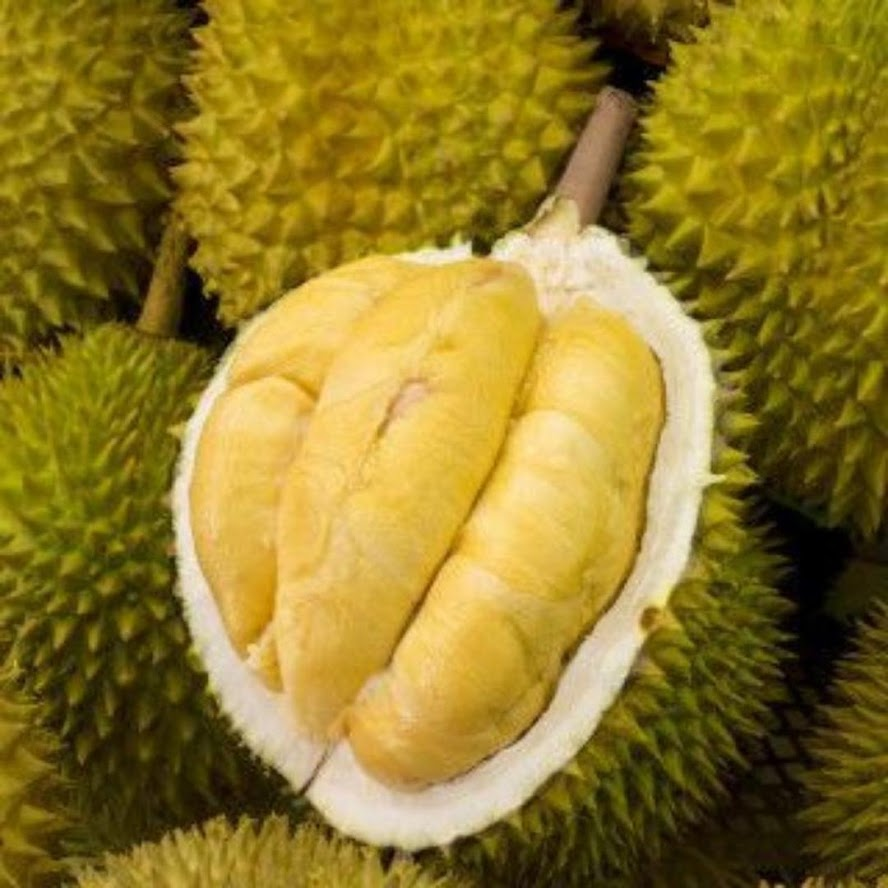 bibit durian bawor okulasi cepat berbuah Mataram