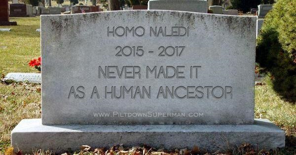 Homo naledi was no evolution ancestor, it was a dead end