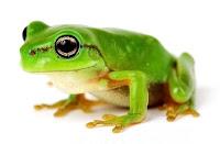 Parlak yeşil renkte küçük ve sevimli bir kurbağa