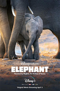 Elephant (2020) [Latino-Ingles] [Hazroah]