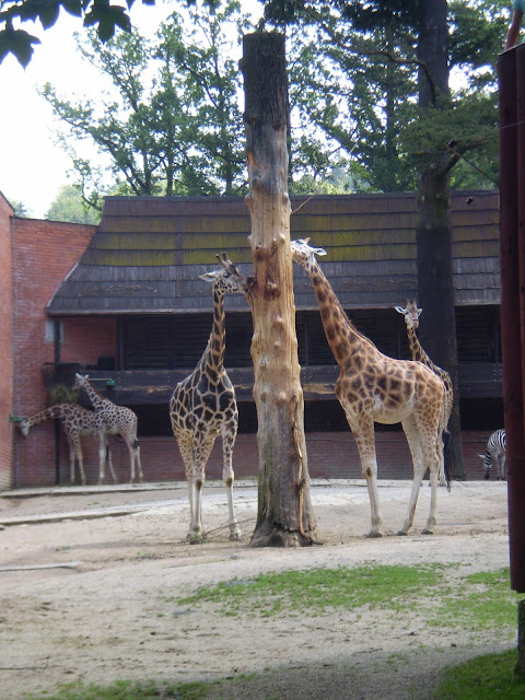 Žirafy - ZOO Liberec