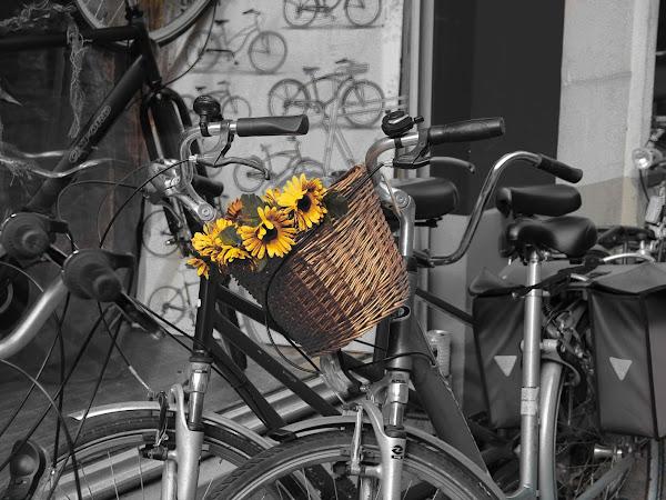 ღFotografie mijn levenღ #14 | Geel op straat