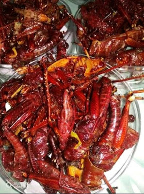 malesmegawe.com - Kuliner Ekstrim Belalang Goreng
